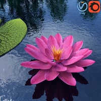 Water Lily - Plant - 0001