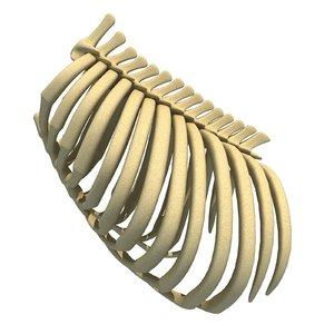 3D animal rib cage model