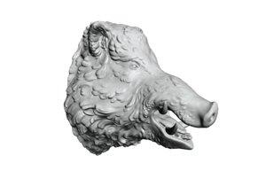 3D head boar