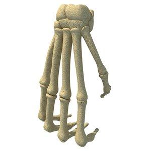 3D animal hand bones model
