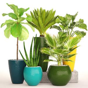plants cycas ficus model