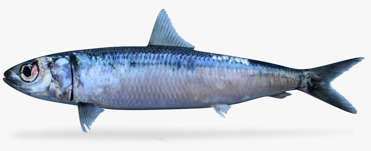 3D herring
