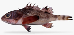 sonora scorpionfish 3D model