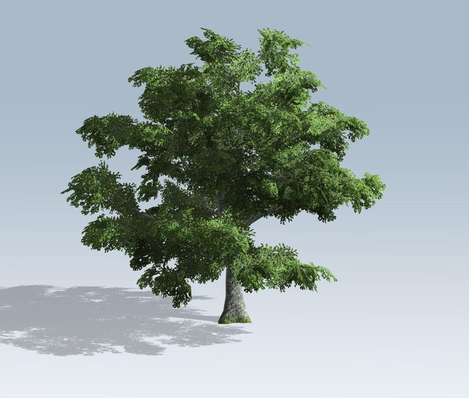 white oak 3D model