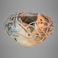 3D cell nucleus