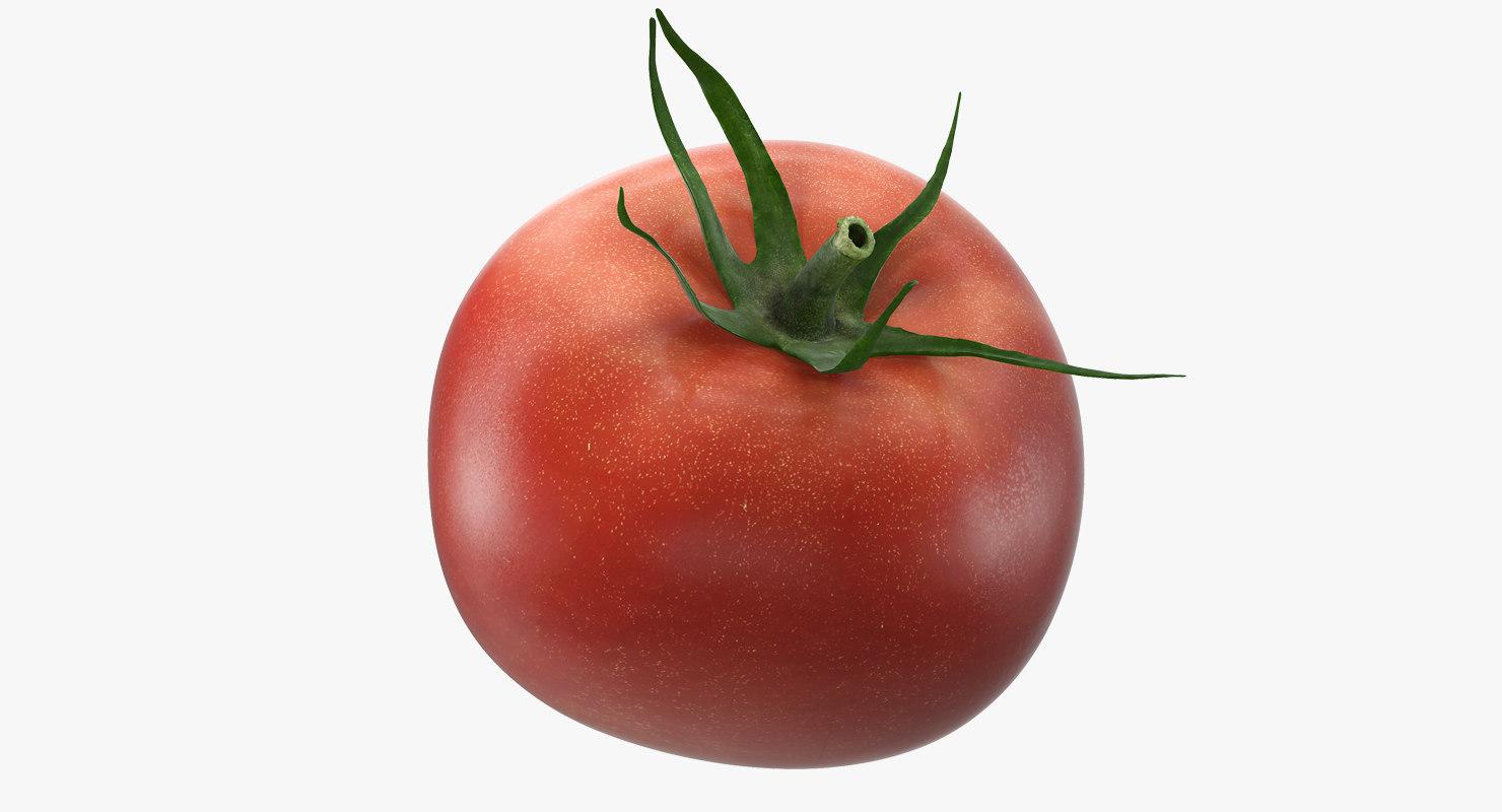 tomato realistic model