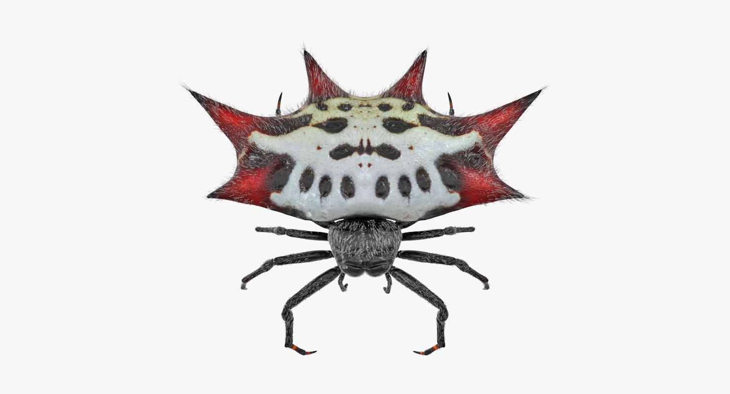spiny orb weaver spider 3D model