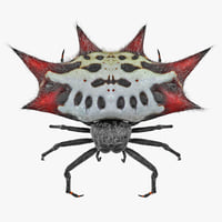 spiny orb weaver spider 3D model