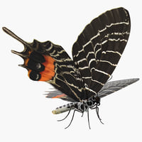 bhutan glory swallowtail butterfly 3D model