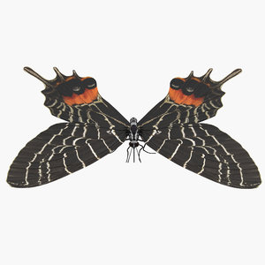 bhutan glory butterfly 3D
