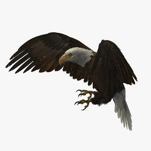 3D american bald eagle rigged model