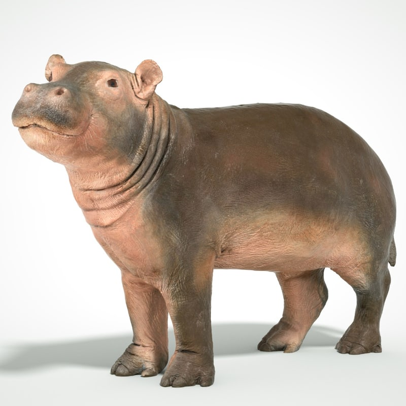 3D animal scanned unity