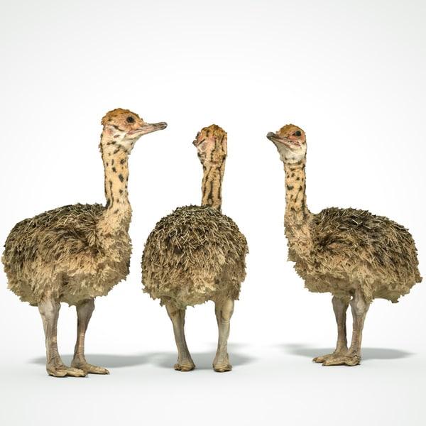 animal scanned unity 3D model
