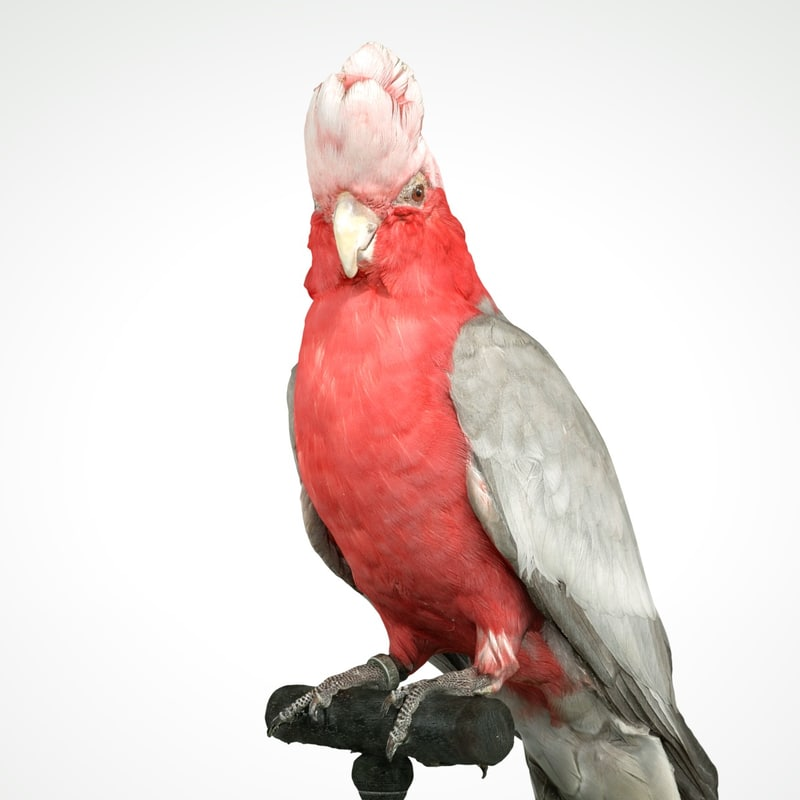animal scanned unity model