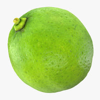 3D lime realistic model
