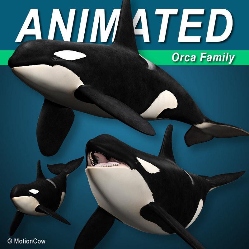 3D orca killer whale model
