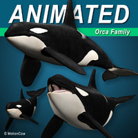 Orca (Killer Whale) Family
