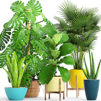 Collection plants(1)(1)