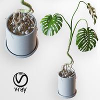monstera tropical plant flowering 3D model
