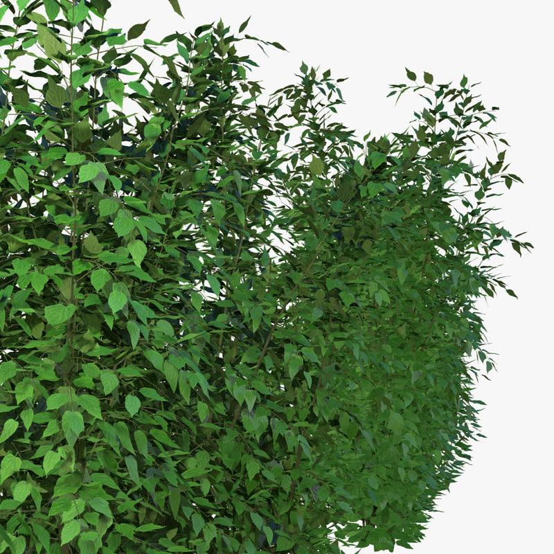 bush hibiscus 3D model