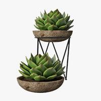 succulent pot plant 3D model