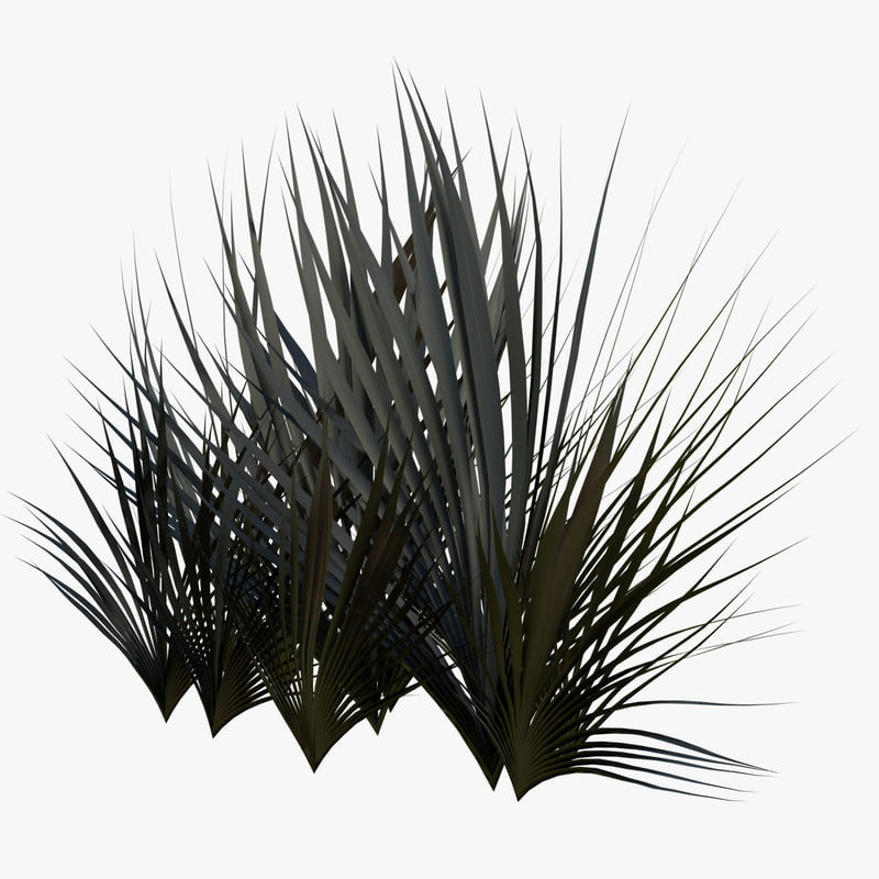 3D model plant phormium rubro