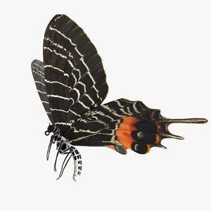 bhutanitis lidderdalii glory butterfly 3D model