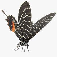 3D bhutanitis lidderdalii butterfly rigged