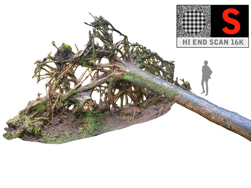 3D tree roots hd 16k
