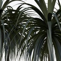3D plant dracena arborea