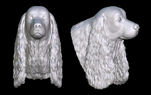 3D cocker spaniel head