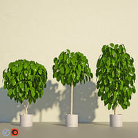 3D coffee tree