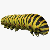 realistic caterpillars 02 3D model