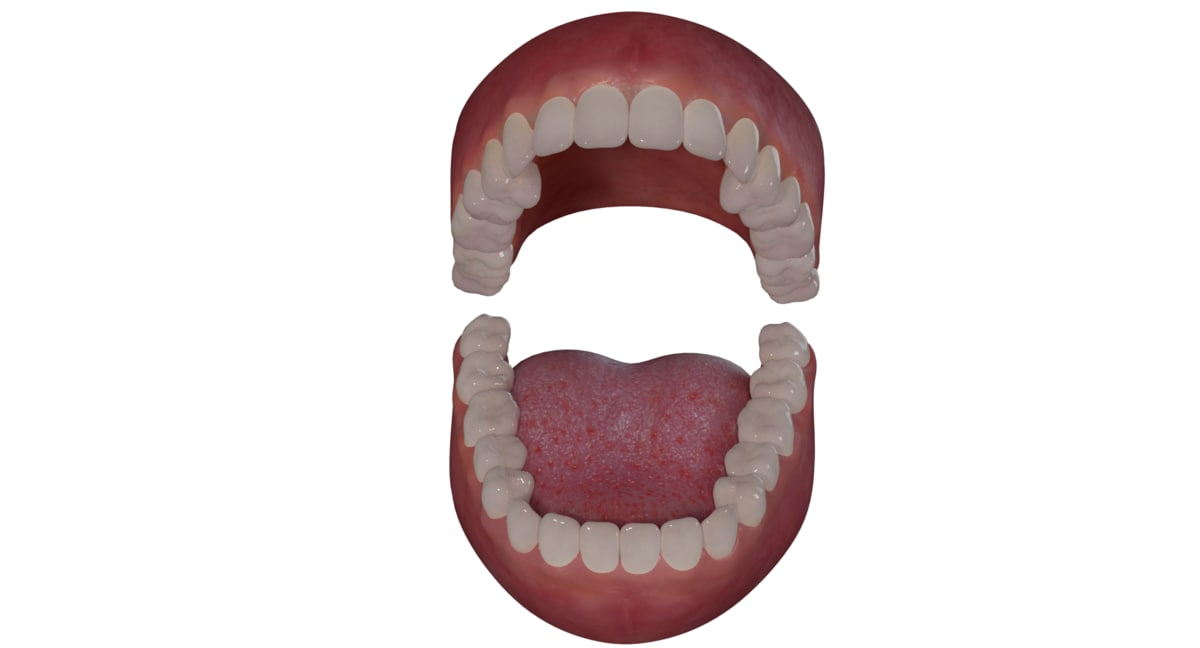 realistical human mouth 3D model