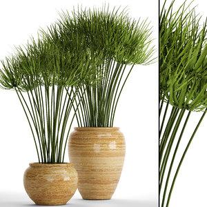 cyperus alternifolius 3D model