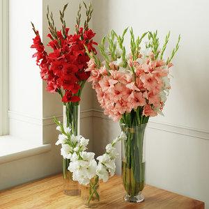 gladiolus model