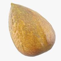 3D avocado seed model