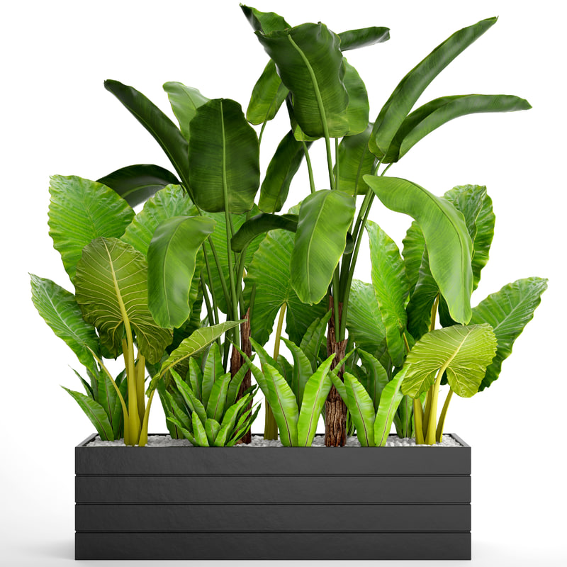 3D tropical plants flowerpot model