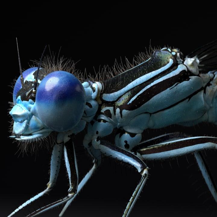 3D damselfly dragonflies