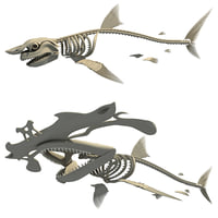 shark skeleton 3D