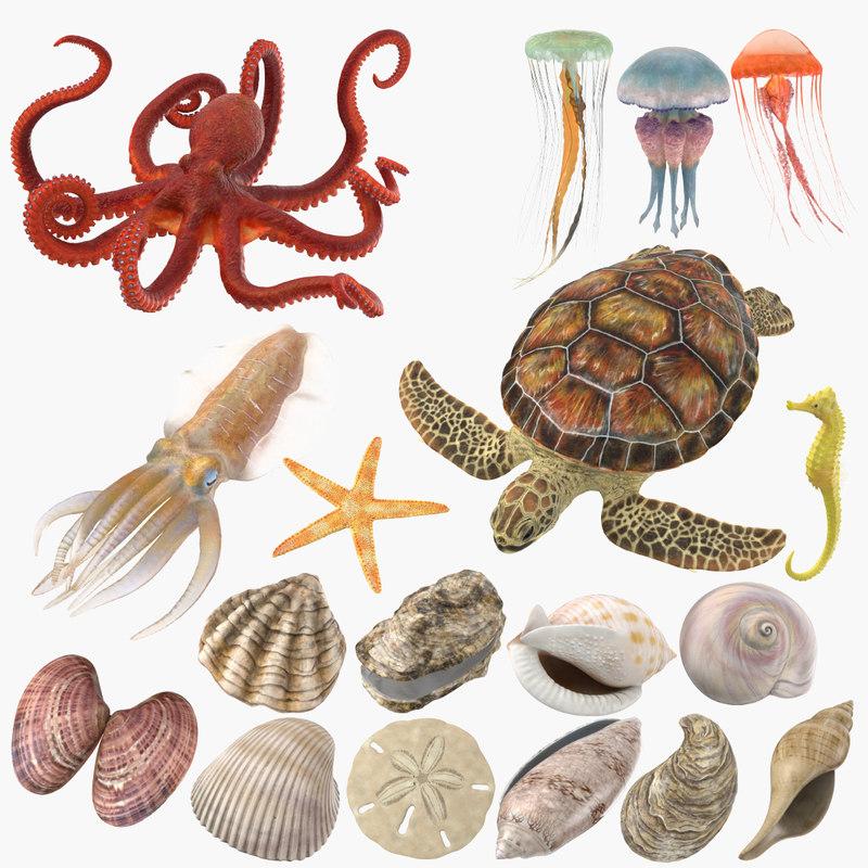 sea animals shells 3D model