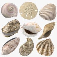 3D sea shells oyster model