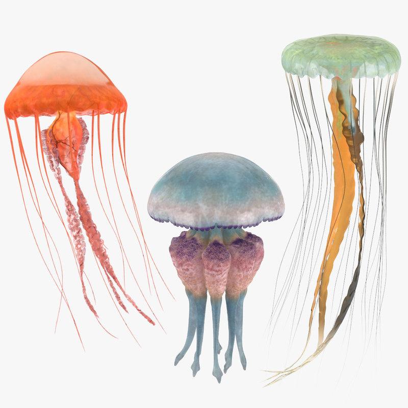 3 jellyfish 3D model