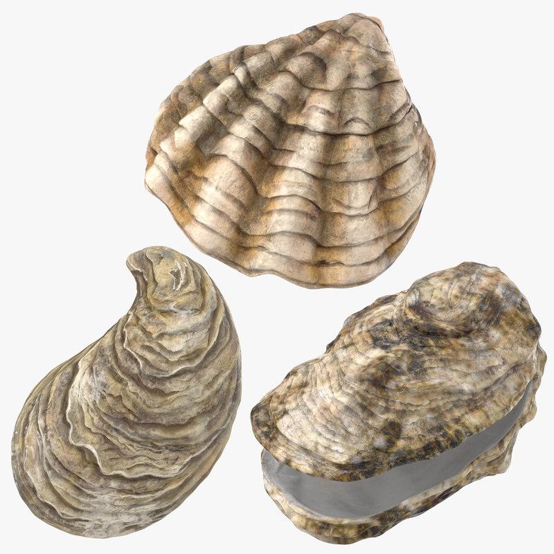 sea shells oyster 3D model