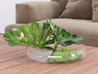 Philodendron Dianthus Vessel