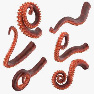 octopus tentacles 3D model