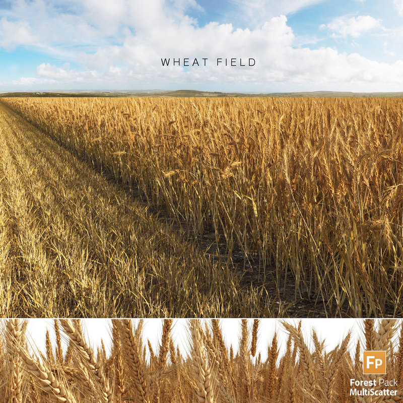 wheat field 3D model