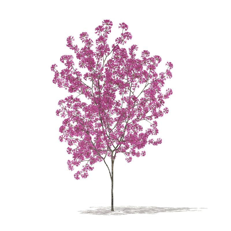 3D red lapacho tree tabebuia