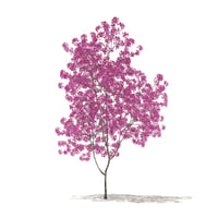 3D red lapacho tree tabebuia