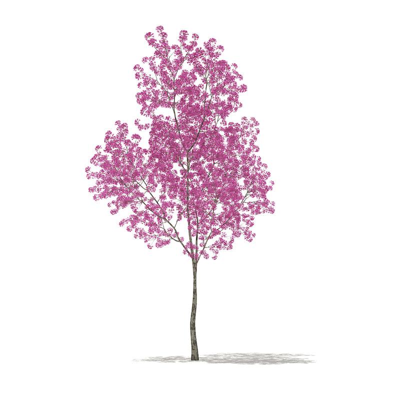 red lapacho tree tabebuia 3D model